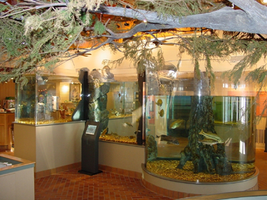 Lake Dardanelle Visitor and Education Center Aquarium